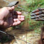 Чем человек отличается от обезьяны: основные отличия
